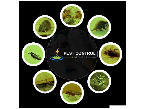 Pest Control Mount Barker