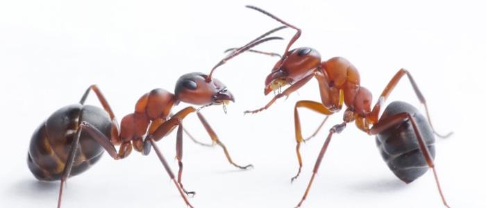 Ant Control Mount Barker