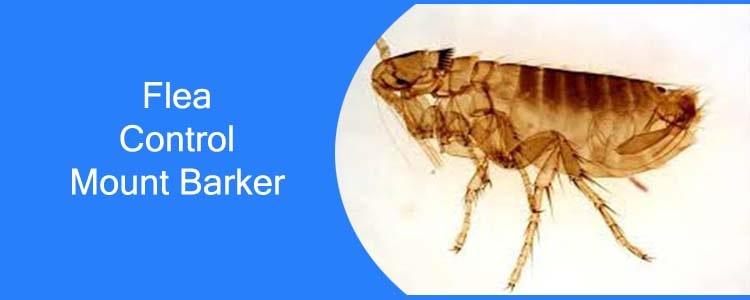 Flea Control Mount Barker